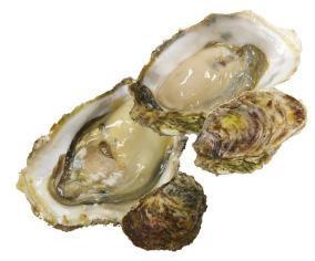 岩牡蠣と真牡蠣の違いとは?